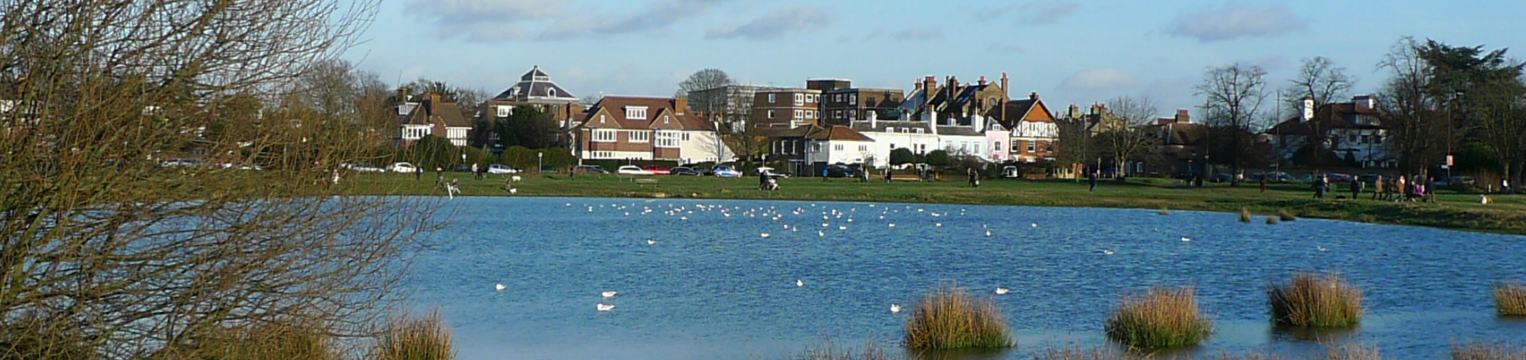 Rushmere pond, Wimbledon Common
